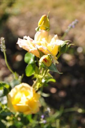 5 juillet : une ou des fleurs Dsc_1013