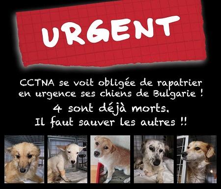 Rapatriement 30 chiens de Bulgarie du 7 & 8 décember 2018 Affich49