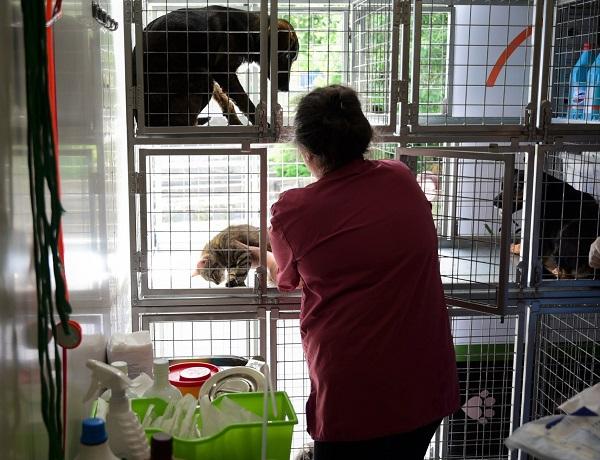 Stérilisation animaux errants à AKSAKOVO - 30 mai au 8 juin 2018 Aksako17