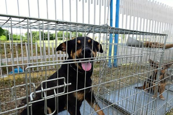 Stérilisation animaux errants à AKSAKOVO - 30 mai au 8 juin 2018 Aksako18
