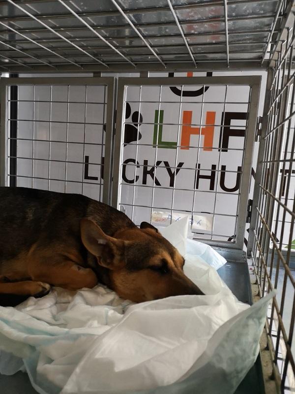 Stérilisation animaux errants à AKSAKOVO - 30 mai au 8 juin 2018 Aksako19
