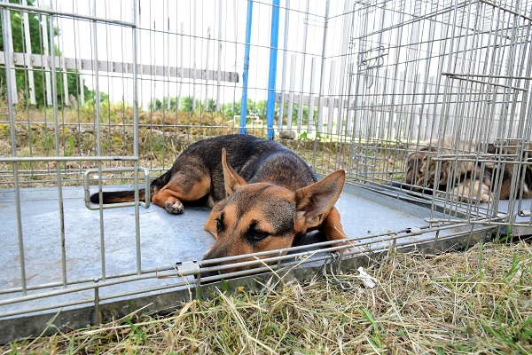 Stérilisation animaux errants à AKSAKOVO - 30 mai au 8 juin 2018 Aksako20