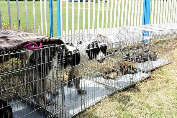 Stérilisation animaux errants à AKSAKOVO - 30 mai au 8 juin 2018 Aksako21