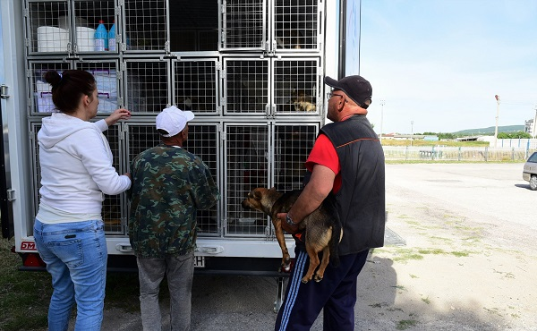 Stérilisation animaux errants à AKSAKOVO - 30 mai au 8 juin 2018 Aksako22