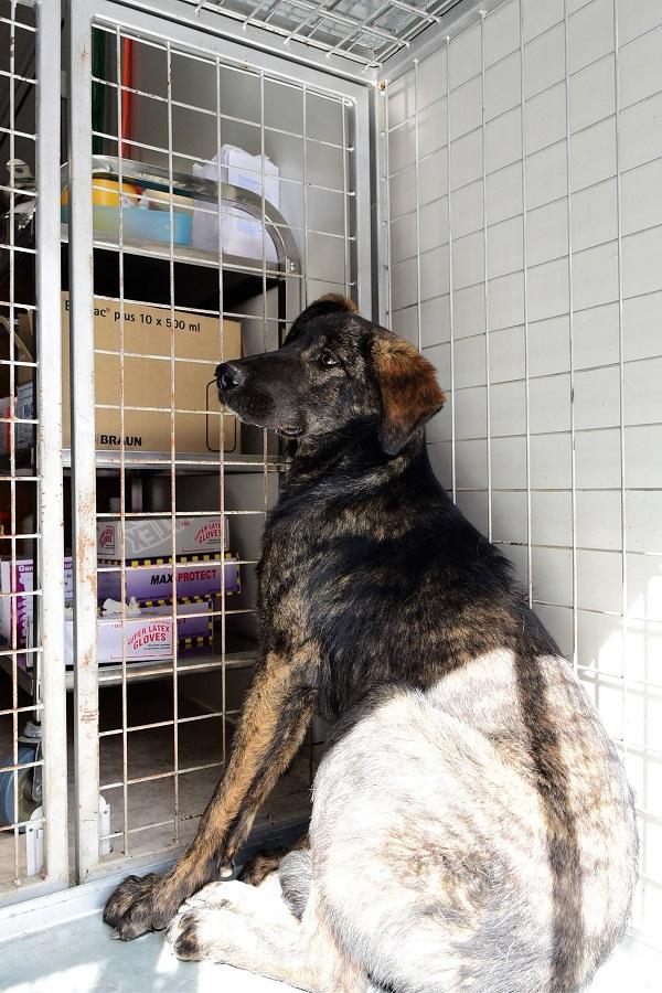 Stérilisation animaux errants à AKSAKOVO - 30 mai au 8 juin 2018 Aksako24