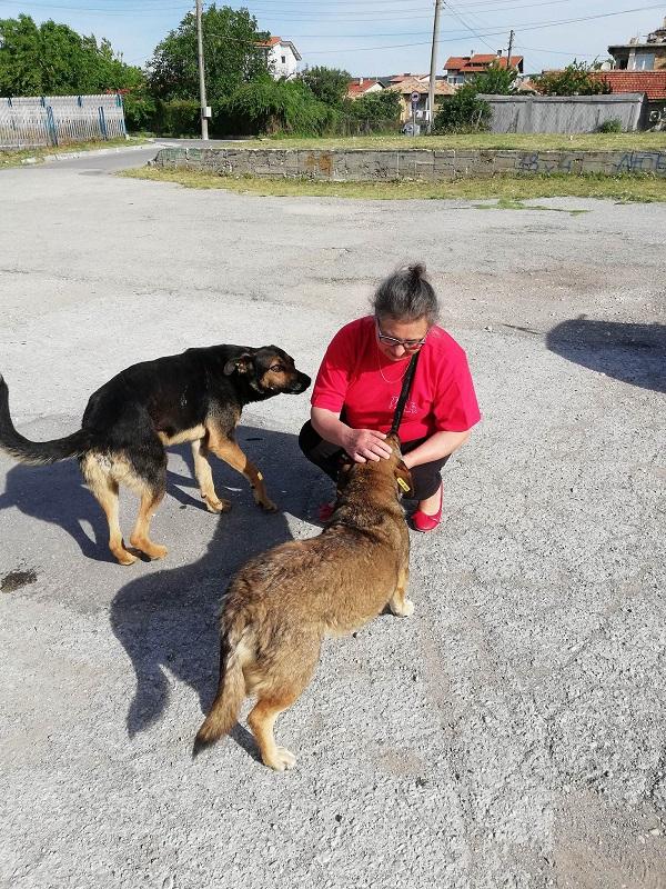 Stérilisation animaux errants à AKSAKOVO - 30 mai au 8 juin 2018 Aksako29