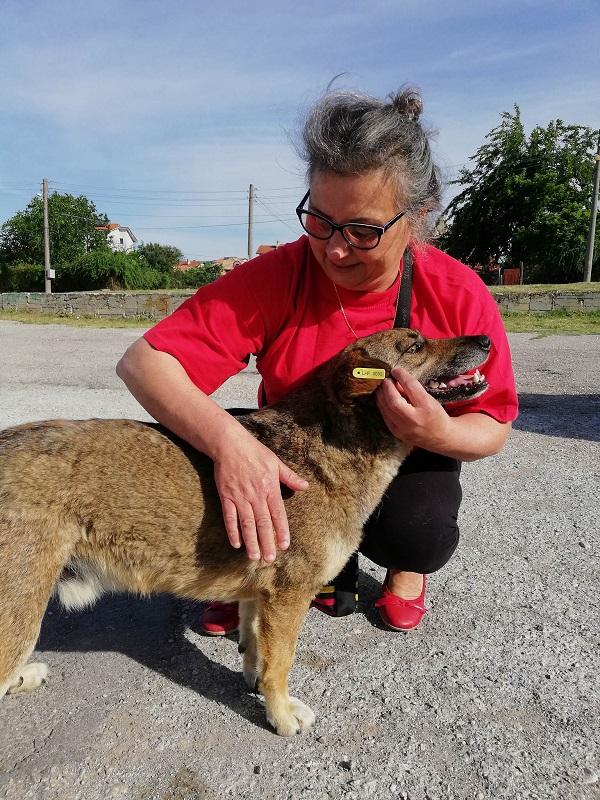 Stérilisation animaux errants à AKSAKOVO - 30 mai au 8 juin 2018 Aksako31