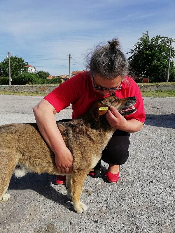 Stérilisation animaux errants à AKSAKOVO - 30 mai au 8 juin 2018 Aksako32
