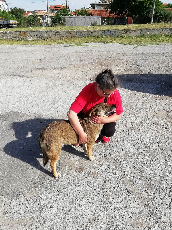 Stérilisation animaux errants à AKSAKOVO - 30 mai au 8 juin 2018 Aksako33
