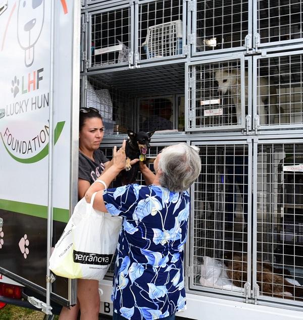 Stérilisation animaux errants à AKSAKOVO - 30 mai au 8 juin 2018 Aksalo14