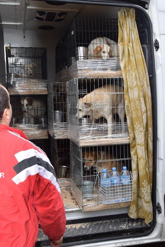 Rapartiement 30 chiens de Bulgarie - février 2018 Arrivy20