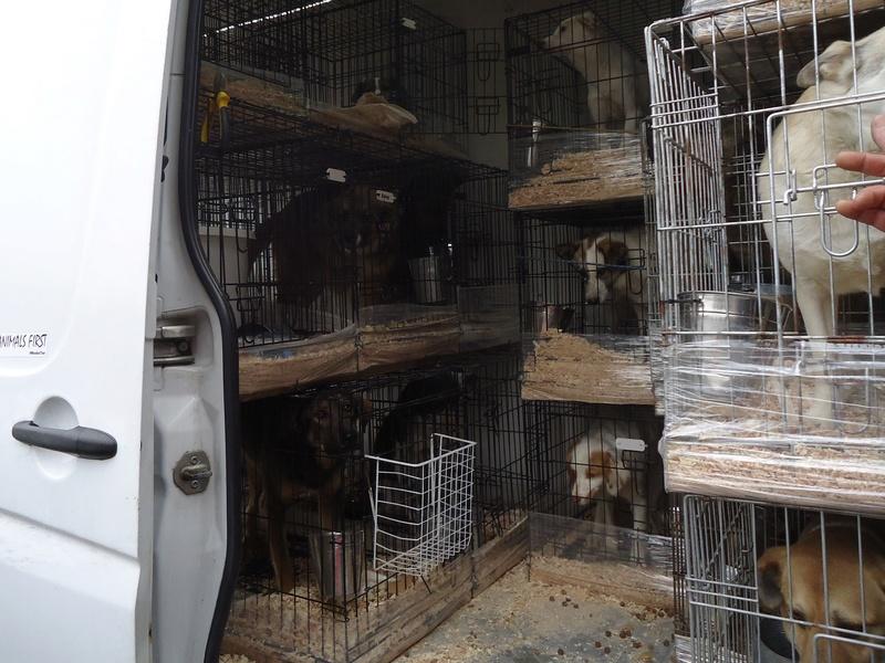 Rapartiement 30 chiens de Bulgarie - février 2018 Arrivy26