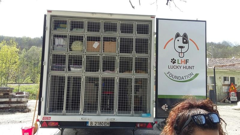 Campagne de stérilisation des chiens errants - PROVADIA - avril 2018 Bg_18_11