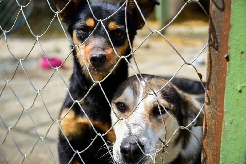 Campagne de stérilisation des chiens errants - PROVADIA - avril 2018 Bg_18_16