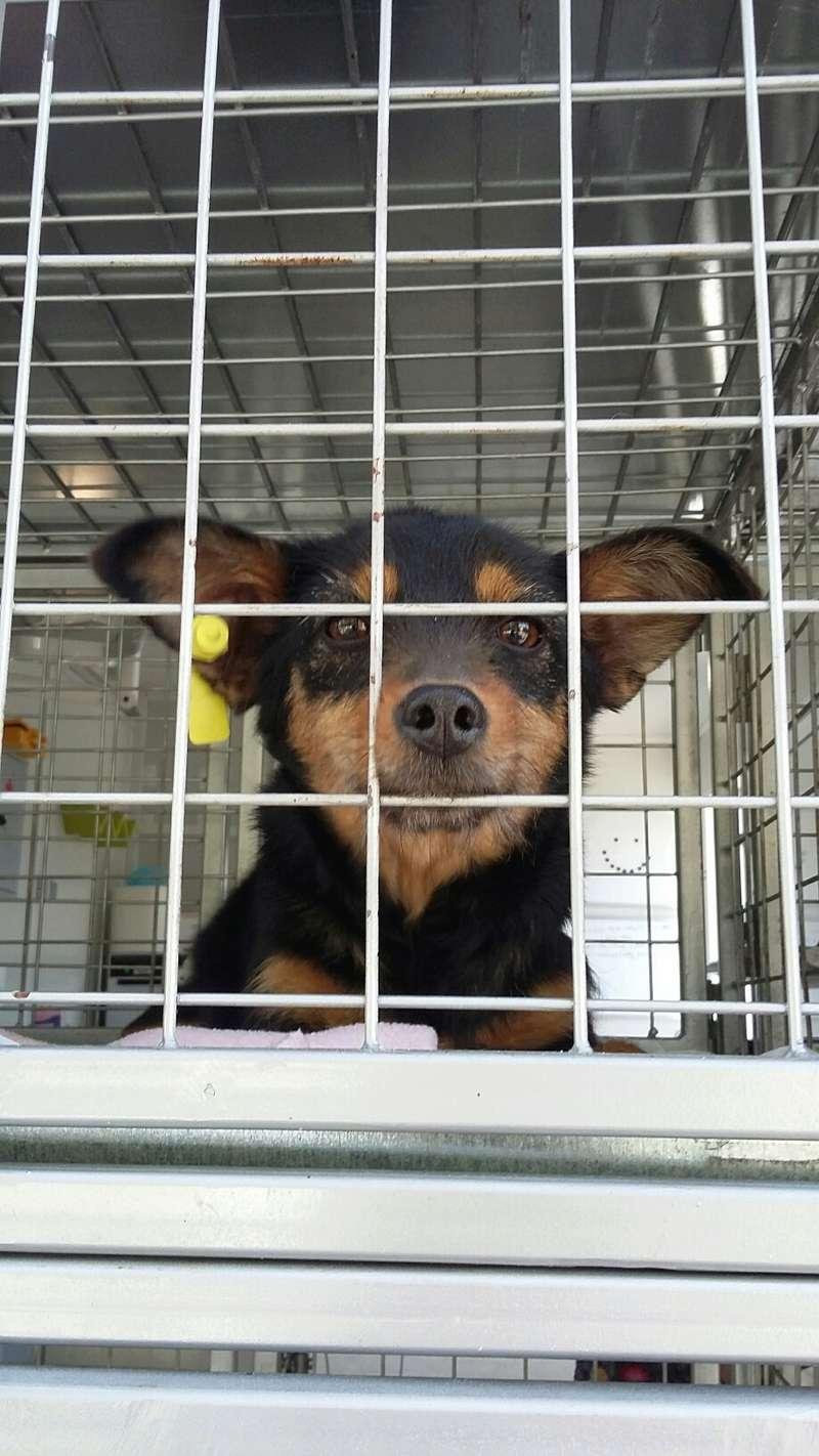 Campagne de stérilisation des chiens errants - PROVADIA - avril 2018 Bg_18_17