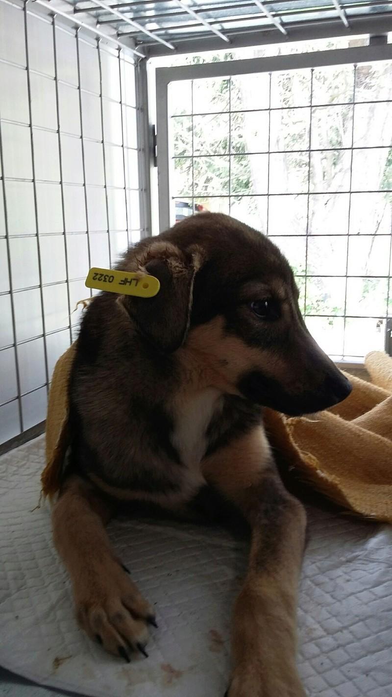 Campagne de stérilisation des chiens errants - PROVADIA - avril 2018 Bg_18_18