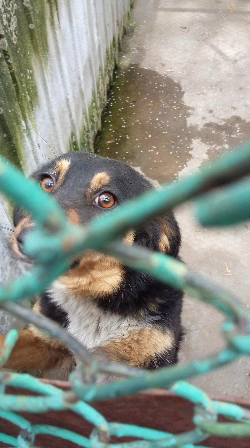 Campagne de stérilisation des chiens errants - PROVADIA - avril 2018 Bg_18_20