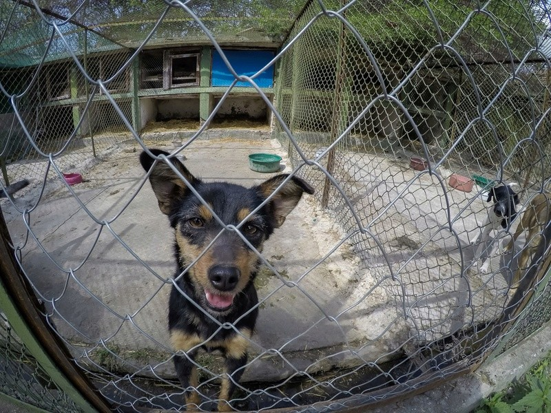 Campagne de stérilisation des chiens errants - PROVADIA - avril 2018 Bg_18_21