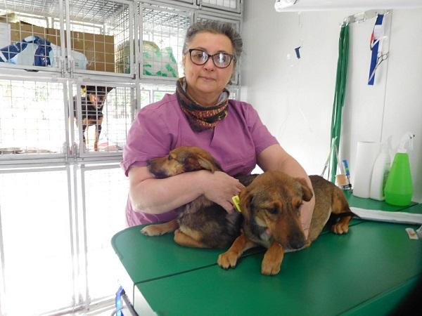 Campagne de stérilisation des chiens errants - PROVADIA - avril 2018 Bg_19_10