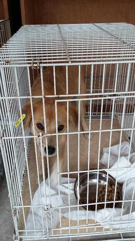 Campagne de stérilisation des chiens errants - PROVADIA - avril 2018 Bg_19_18