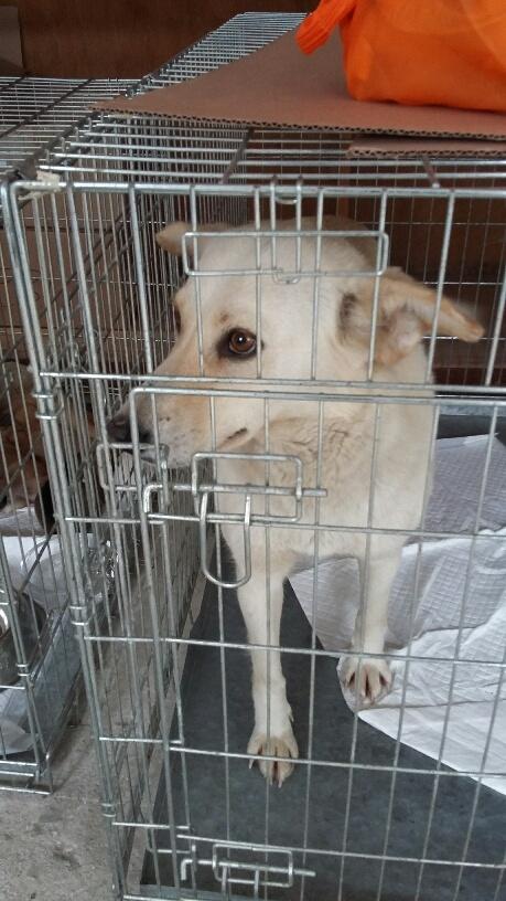 Campagne de stérilisation des chiens errants - PROVADIA - avril 2018 Bg_19_21