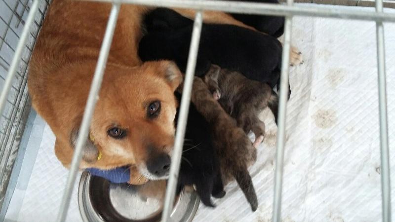 Campagne de stérilisation des chiens errants - PROVADIA - avril 2018 Bg_19_22