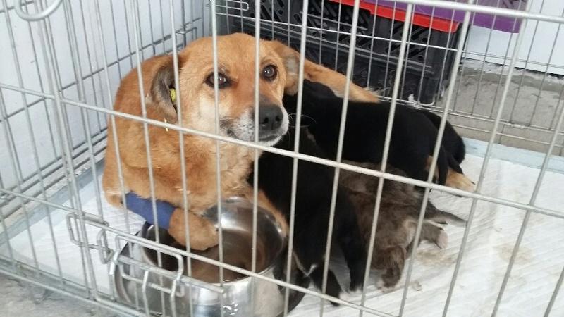 Campagne de stérilisation des chiens errants - PROVADIA - avril 2018 Bg_19_25
