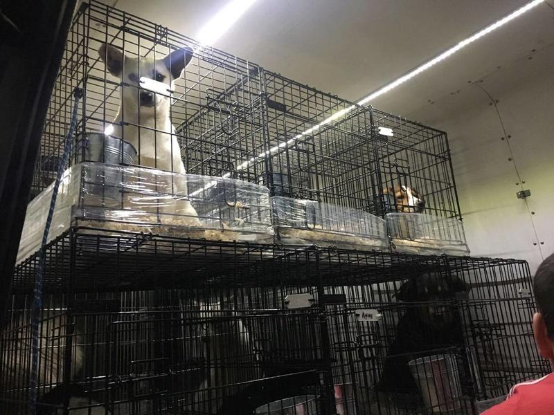 Rapartiement 30 chiens de Bulgarie - février 2018 Bg_dyp16