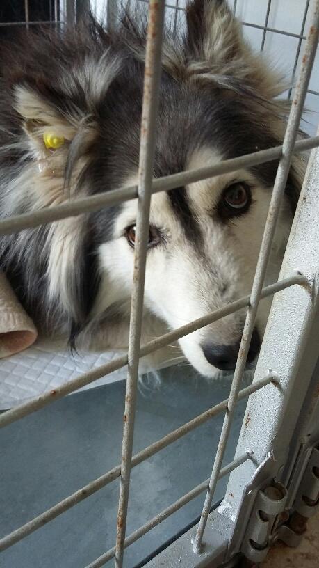 Campagne de stérilisation des chiens errants - PROVADIA - avril 2018 Bg_pro14