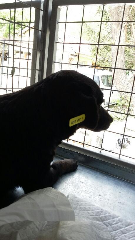 Campagne de stérilisation des chiens errants - PROVADIA - avril 2018 Bg_pro15