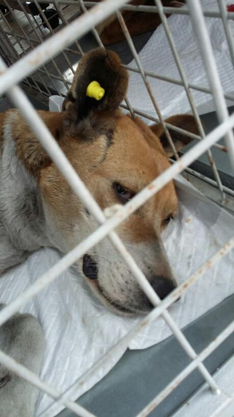 Campagne de stérilisation des chiens errants - PROVADIA - avril 2018 Bg_pro17