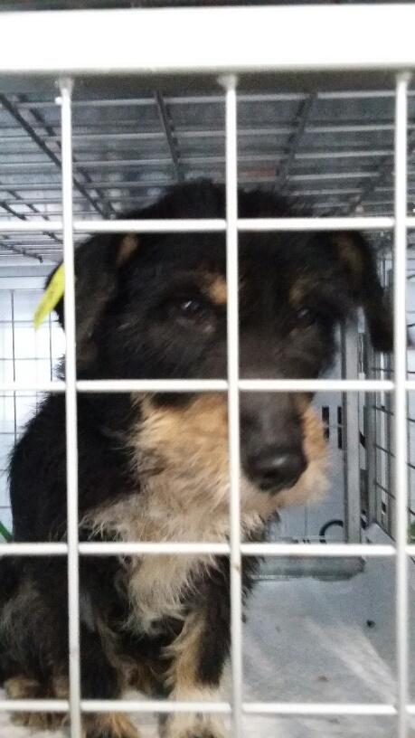 Campagne de stérilisation des chiens errants - PROVADIA - avril 2018 Bg_pro18