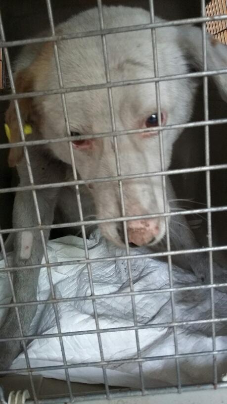 Campagne de stérilisation des chiens errants - PROVADIA - avril 2018 Bg_pro24