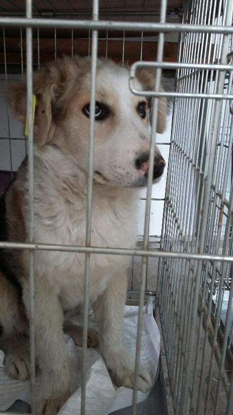 Campagne de stérilisation des chiens errants - PROVADIA - avril 2018 Bg_pro25