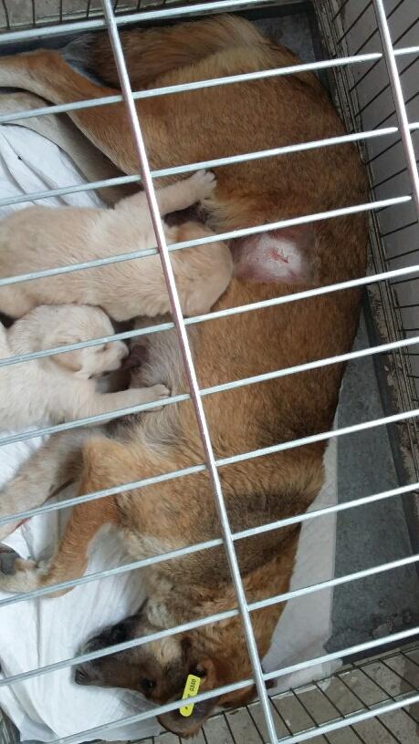 Campagne de stérilisation des chiens errants - PROVADIA - avril 2018 Bg_pro26