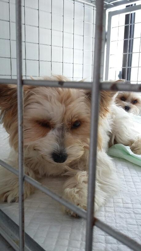 Campagne de stérilisation des chiens errants - PROVADIA - avril 2018 Bg_pro28