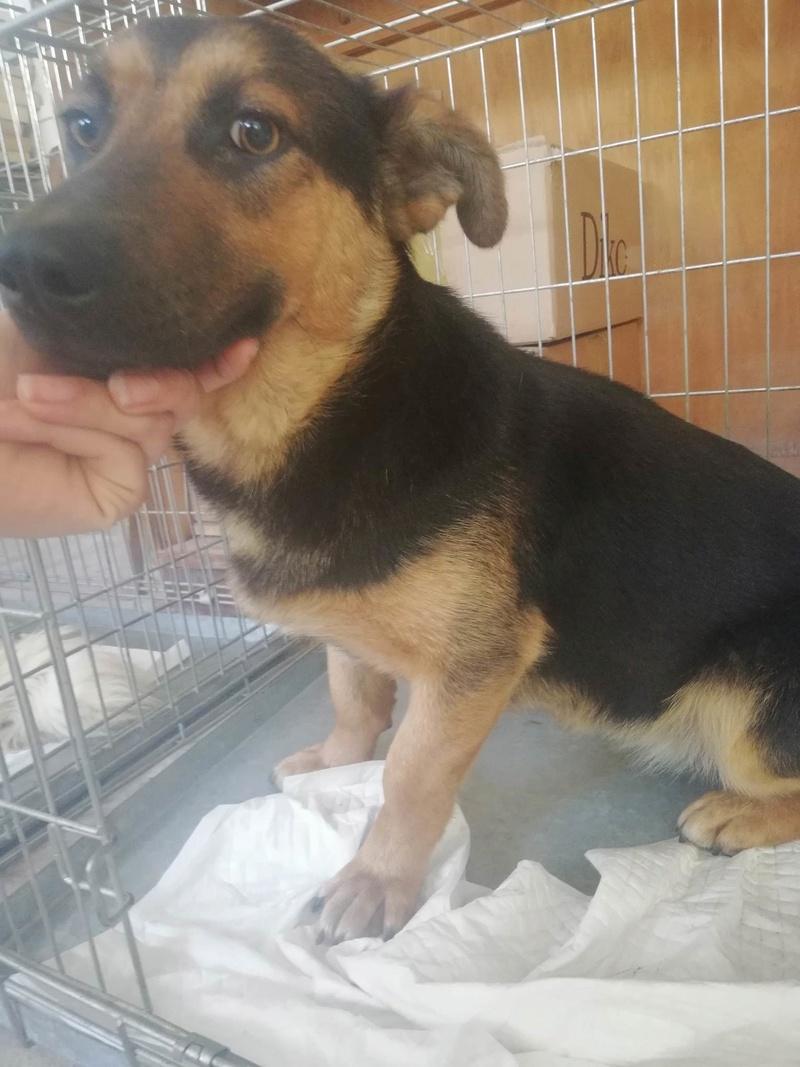Campagne de stérilisation des chiens errants - PROVADIA - avril 2018 Bg_pro31