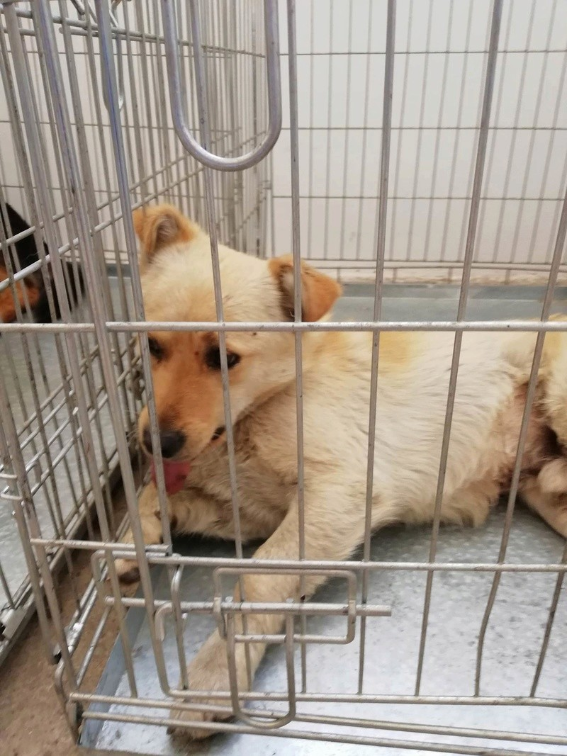 Campagne de stérilisation des chiens errants - PROVADIA - avril 2018 Bg_pro32