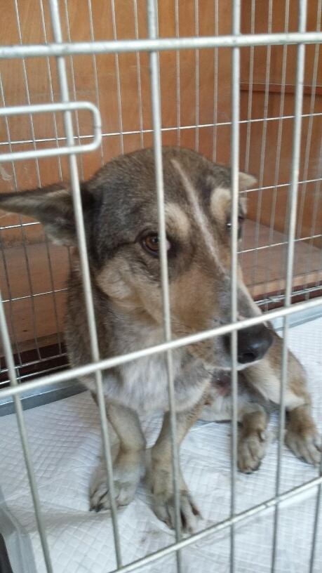 Campagne de stérilisation des chiens errants - PROVADIA - avril 2018 Bg_pro36