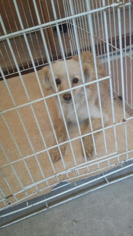 Campagne de stérilisation des chiens errants - PROVADIA - avril 2018 Bg_pro37