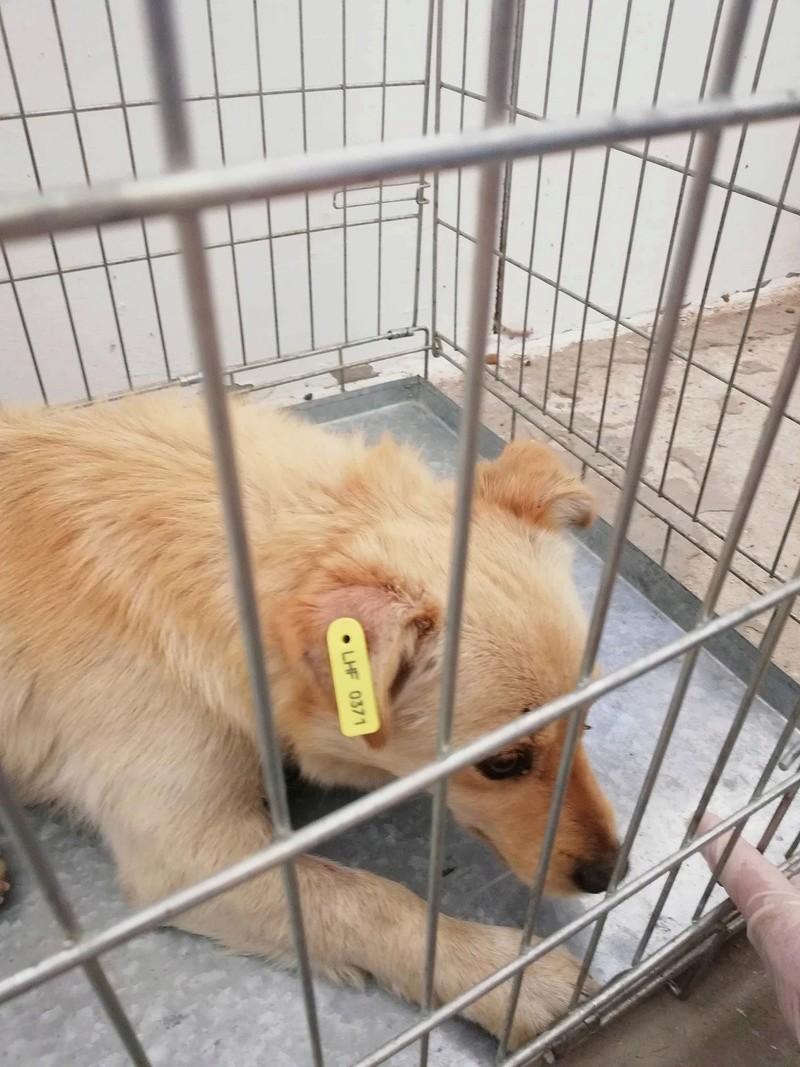 Campagne de stérilisation des chiens errants - PROVADIA - avril 2018 Bg_pro39