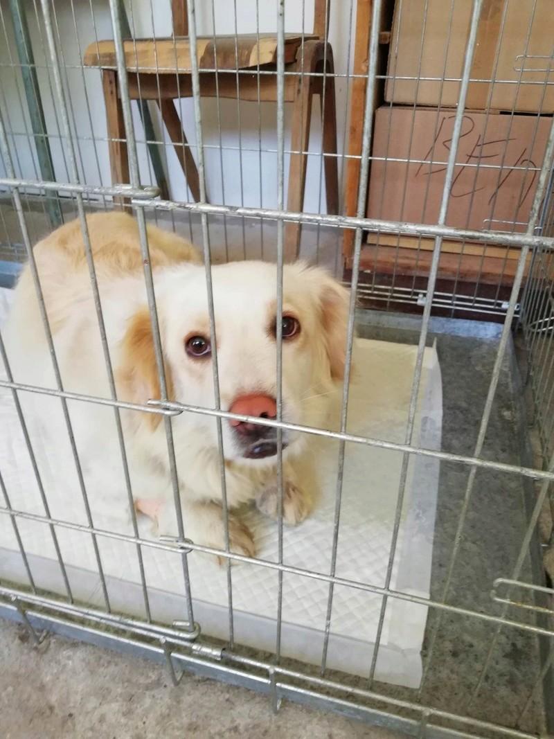 Campagne de stérilisation des chiens errants - PROVADIA - avril 2018 Bg_pro40