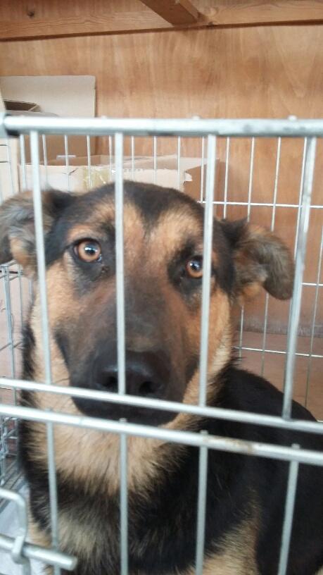 Campagne de stérilisation des chiens errants - PROVADIA - avril 2018 Bg_pro41
