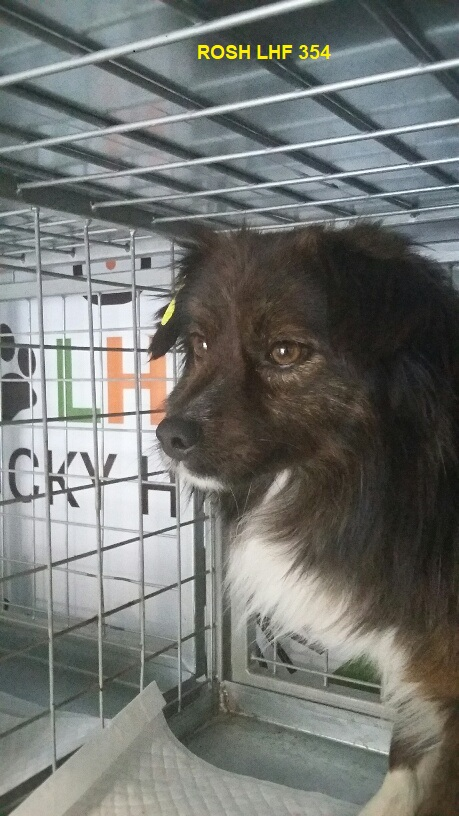 Campagne de stérilisation des chiens errants - PROVADIA - avril 2018 Bg_pro42