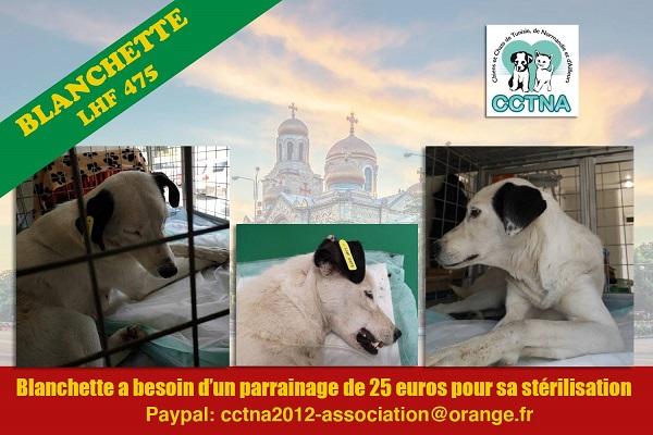 BLANCHETTE, identifiée LHF 475, parrainée par normande27 : 25 euros Blanch24