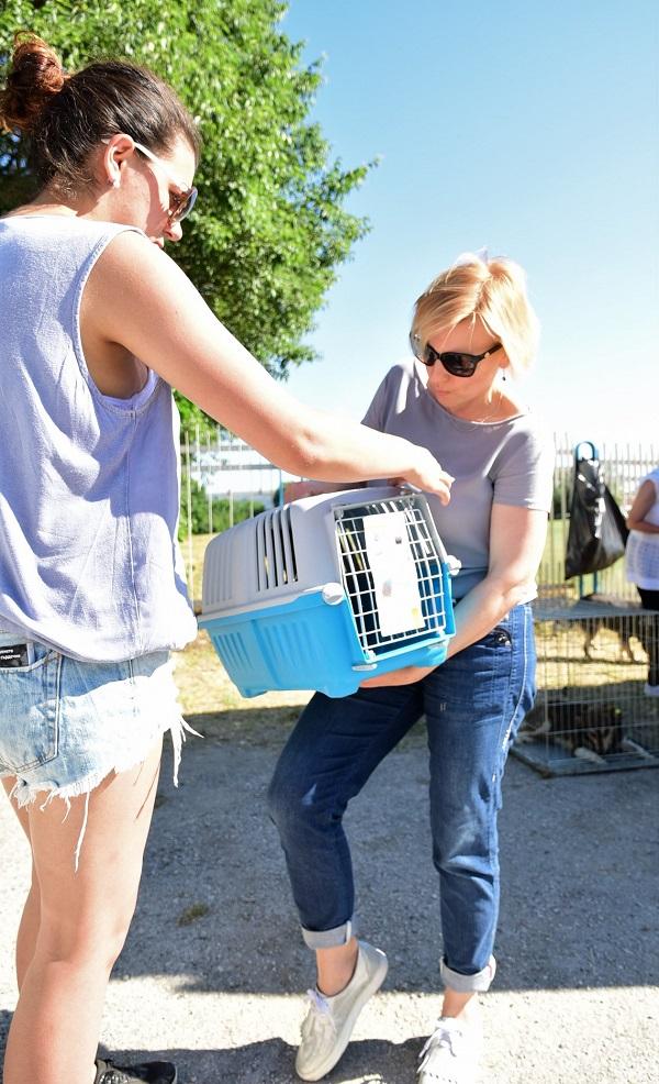 Stérilisation animaux errants à AKSAKOVO - 30 mai au 8 juin 2018 Cliniq19