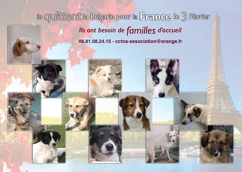 Rapartiement 30 chiens de Bulgarie - février 2018 Dypart11