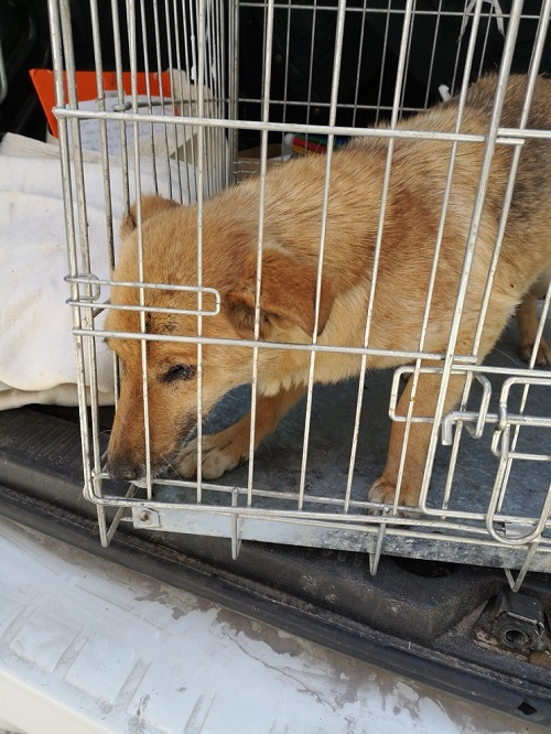 Stérilisation animaux errants à AKSAKOVO - 30 mai au 8 juin 2018 Iris_b10