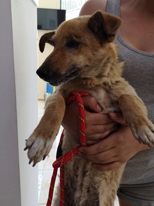 Stérilisation animaux errants à AKSAKOVO - 30 mai au 8 juin 2018 Iris_b12