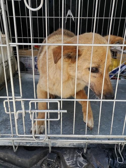 Stérilisation animaux errants à AKSAKOVO - 30 mai au 8 juin 2018 Iris_b13